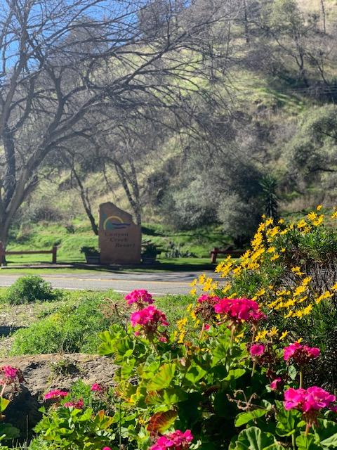 Spring at Vista Resorts