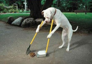 dog-pooper-scooper