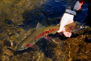 putah-creek-fly-fishing-photo
